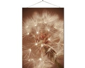 Wishful Thinking 8x12 fine art photo - dandelion - free U.S. shipping