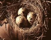 Nesting, 8x10 warm tone 8x10 Fine Art Photograph