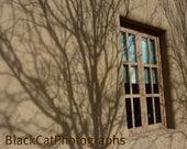 New Mexico Window art, Minimalist photography, bare branch shadow photograph, Santa Fe print, abstract tree art, Southwest decor