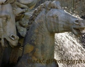 Italian Photography, Horse Photo, Water Fountain Sparkle, horse lover, architecture, grey stone statue, Italian wall art, 5x7 fine art photo