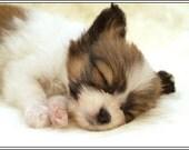 4 Dog Puppy Papillon Greeting Notecards/ Envelopes Set