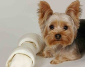 4 Dog Puppy Yorkshire Terrier Greeting Notecards/ Envelopes Set