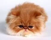4 Kitten Cat  Greeting Notecards/ Envelopes Set