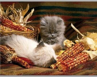 4 Autumn Halloween Kitten Cat Greeting Notecards/ Envelopes Set