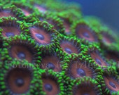 Coral Underwater Landscape Photography 5x7