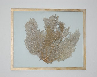 Sea Fans - Gold Tinted in Gold Distressed Frame