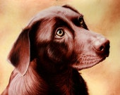 "Pet Portraits / Extremely Detailed/ Colored Pencil / 18"" x 22""/ Ian Herrmann"