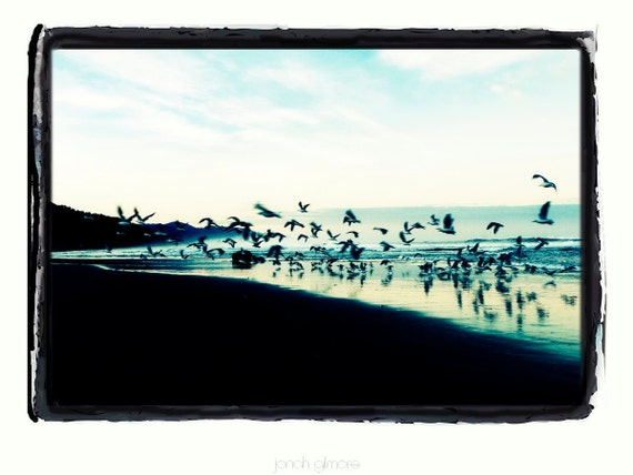 Flurry of Seagulls flying at Sunset Over Ocean Beach Fine Art Print