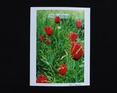 Red Tulip Photo Card