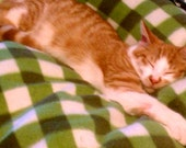 Cat Bed green and white checkered infused with organic catnip & two pack catnip toys