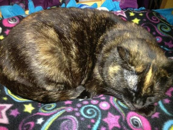 Cat Bed Stars & Swirls Organic Catnip