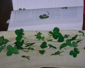 Single Real Clover Lucky Piece Natural Four Leaf Clover Bookmark, Enclosure, Token