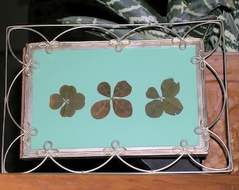 OOAK Trio Real Four Leaf Clovers on Lucky Green in Lacey Frame