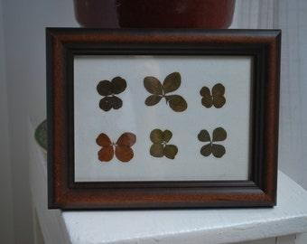 "Six Real Four Leaf Clovers in Custom Wooden 6""x8"" Frame Keepsake"