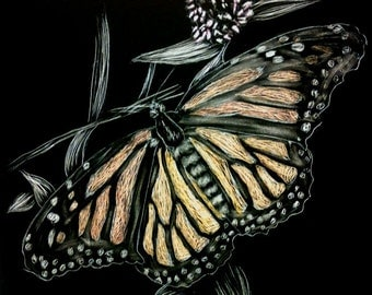 Butterfly scratchboard - photo#14