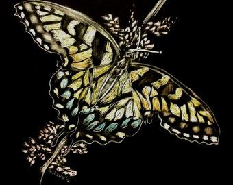 Scratchboard Print - Butterfly, yellow wings