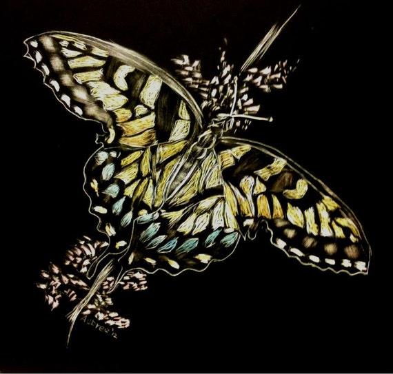 Butterfly scratchboard - photo#19