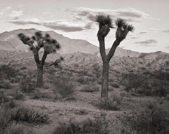"""Fine Art Print - Joshua Trees,  Mojave Desert 8.5"""" x 11""""  Signed by Artist"""