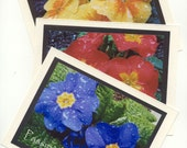 Primroses-TriColor- and Rain Droplets Blank Photo Cards