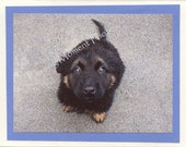 Puppy - German Shepherd - Blank Photo Card