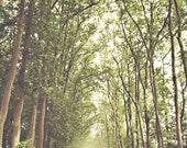 Paris Forest - Paris Photo - 8x10 Fine Art Print - Paris, France - Versailles - Trees, Forest, Woodland, Emerald- Fog, Haze, Mist, Outdoors