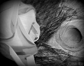 Abstract Photo, Surreal, Black and White, Rose and Peacock, Fine Art Photo, Still life, Home Decor in black and white