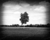 landscape, tree, pinhole, black and white, 8 x 10 print