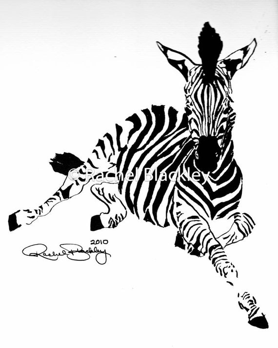 Young Zebra Ink Sketch Ink Drawing Pen and Ink Black and