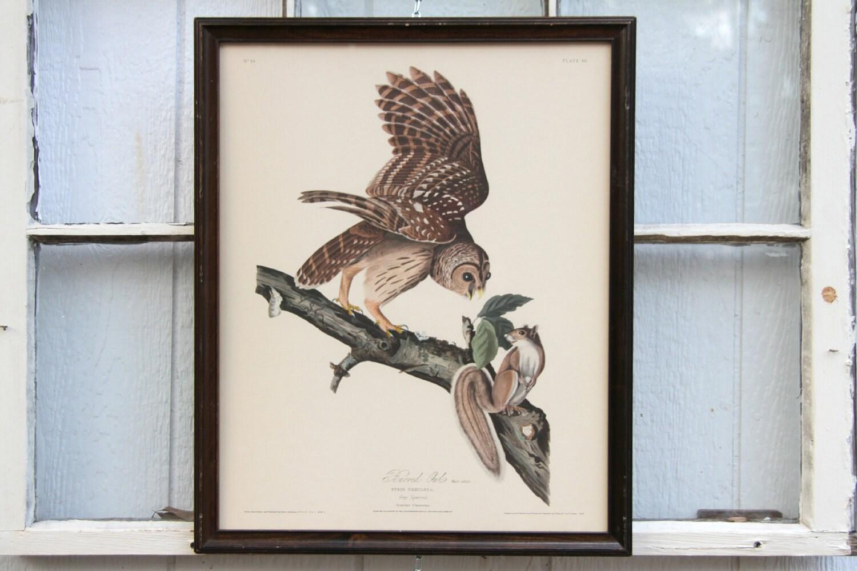 1950 S Barred Owl Audubon Print By Northwestern Mutual