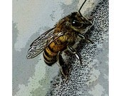 Fine Art Print, 5x7 Fine Art Photograph, Honey Bee Print, Macro, Color Photograph, by Thomas M. - Free Shipping