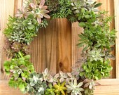 """12"""" Succulent Living Wreath Perfect Unique Gift NEW Lower SHIPPING"""