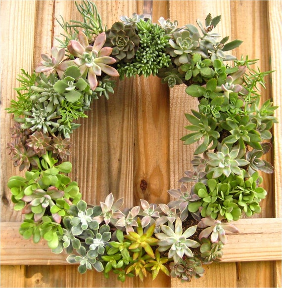 "12"" Succulent Living Wreath Perfect Unique Gift NEW Lower SHIPPING"