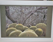 5x7 Greeting card or birthday card, 5x7 blank greeting card, Barrel cactus and tree card, fine art photography