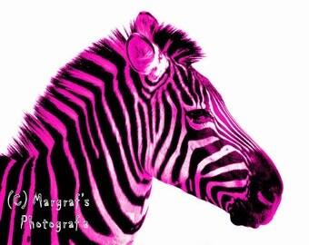 Hot pink Zebra Photography print, 8x10 zebra print, hot pink zebra print