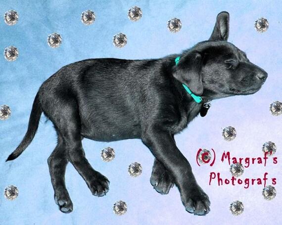 Black labrador retriever cute puppy photography, 8x10 Black lab photo, Moxie in the Sky with Diamonds