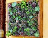 SECRET GARDEN frame - feng shui decor, living wall, living art, zen garden, cool home decor,  wedding gifts, succulents