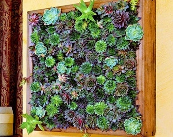 SECRET GARDEN Frame   Feng Shui Decor, Living Wall, Living Art, Zen Garden