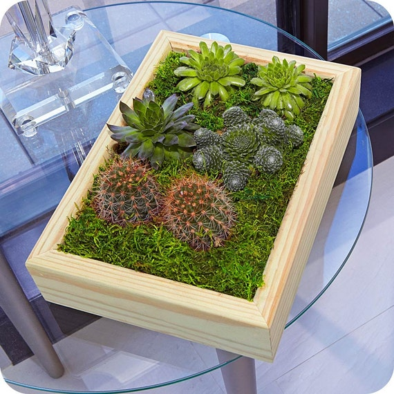 PALAVO TREASURE GARDEN frame-gift for him, gift for her,home decor,hostess, birthday gift, centerpiece, succulents, terrariums, father's day