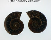 31x25mm Ammonite Fossil Cabochon Pair
