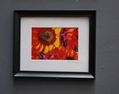 Dyed Sunflowers Framed (8x10) Original photography (5x7)
