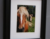 Horse Sense Framed (8x10) original photography