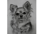 "Let me draw portrait of your pet. Custom / 8"" x 11"" / hand drawn / charcoal / drawing / portrait of your pet."