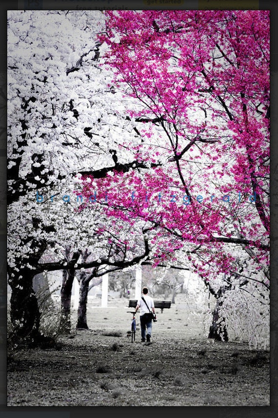 Cherry Blossom Philadelphia Bicycle Springtime Photography Product Options and Pricing via Dropdown Menu