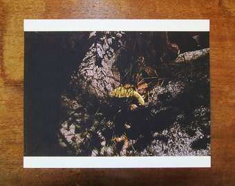 """Artist Proof - Untitled, From the series: A Place to Stake, 2011 (8""""x10"""")"""