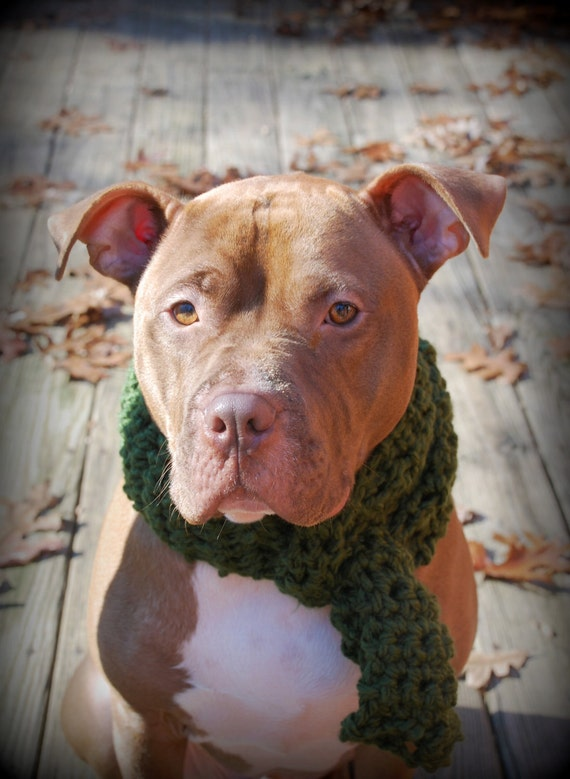 Dog Scarf Green Crochet for Large Breeds