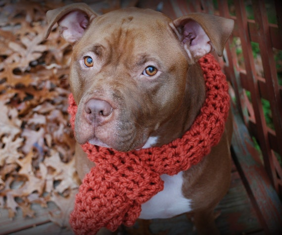 Crochet Dog Scarf Orange for Large Breeds