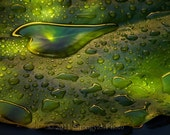 Fine Art Photography Heart, Rain, Waterlily 5x7 photo, green, heartshaped, StrongylosPhoto nature - StrongylosPhoto