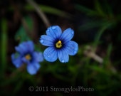 Little Blue Flower handmade card under 5 dollars ready to ship suitable to frame StrongylosPhoto