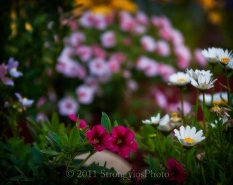 shabby chic home decor 5x7 Photo, Spring flowers, pink, purple, white daisies,StrongylosPhoto