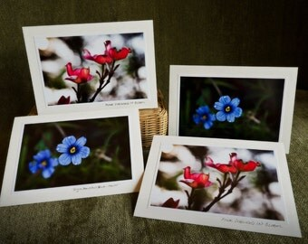 handmade greeting cards, pink flowers blue flowers 4 pack photo prints envelopes ready to ship eco friendly gift idea